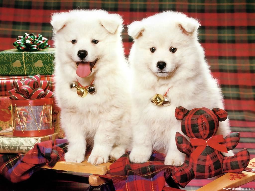 Sfondi Natale - Sfondo Natale Cani