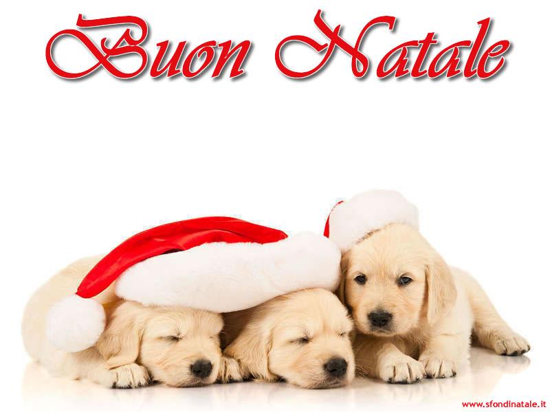 Sfondi Natale - Sfondo Natale cagnolini