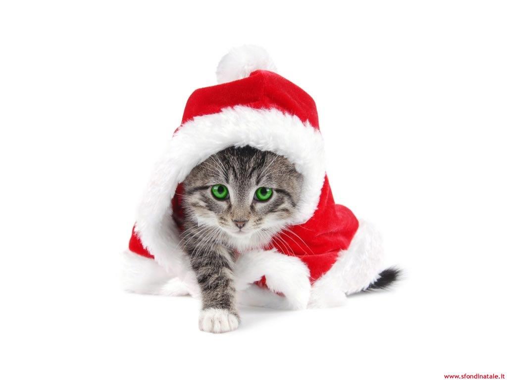 Sfondi Natale - Sfondo desktop Natale gattino