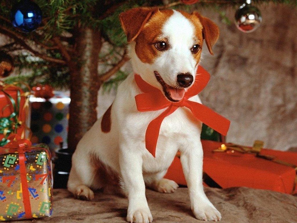 Sfondi Natale - Sfondo natalizio cagnolino