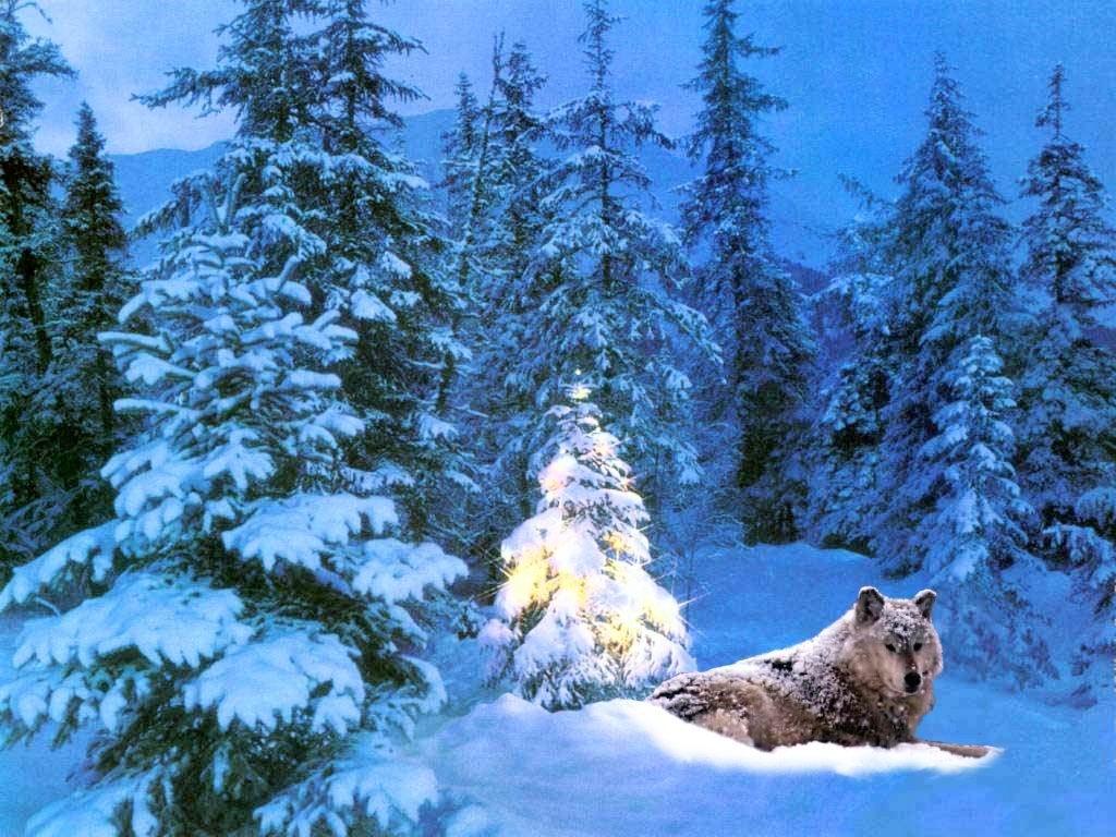 Sfondi Natale - Sfondo Desktop Natale Lupo