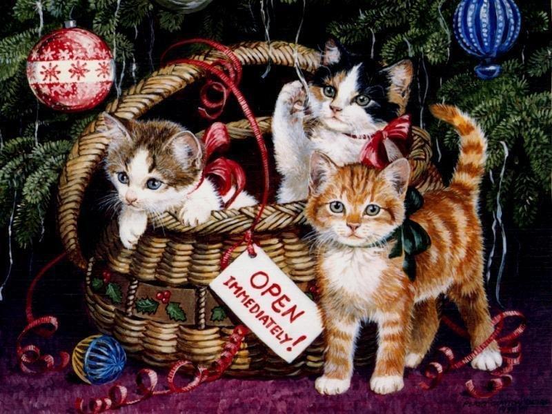 Sfondi Natale - Sfondo Desktop Natale Gattini