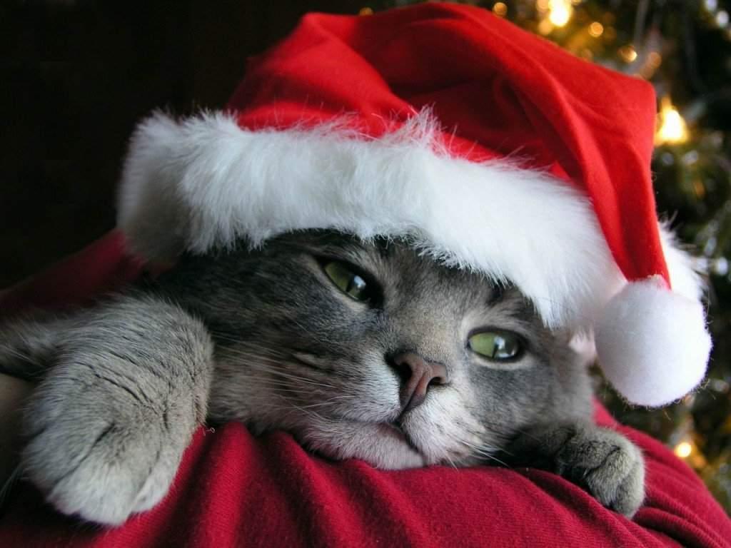 Sfondi Natale - Sfondo natale gatto